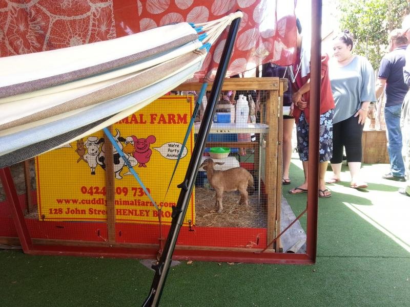 There's a lil baby goat next to #hammocktime today! too cute!