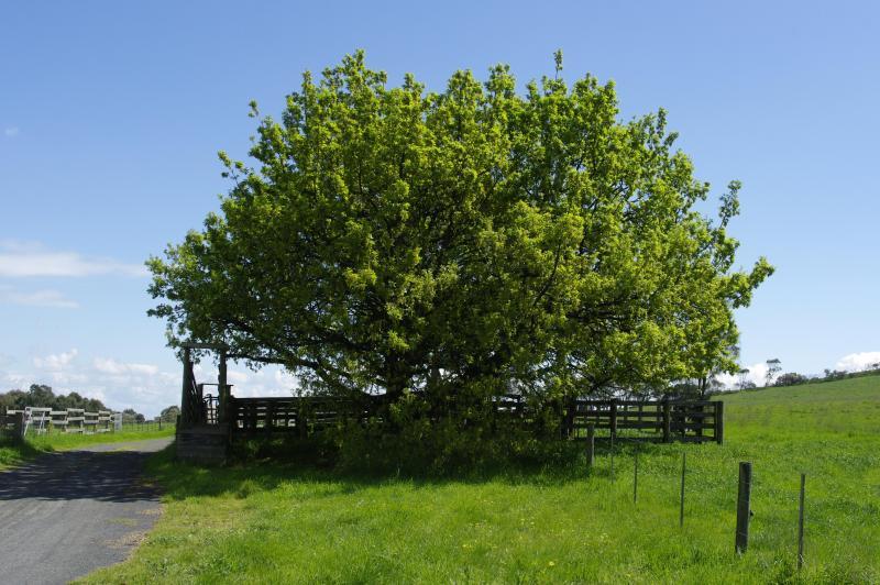 At the farm gate