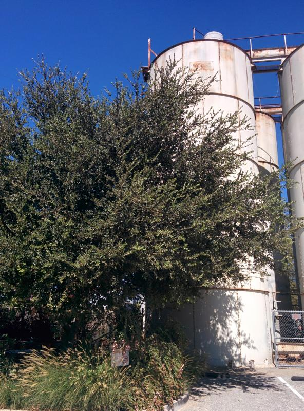Lunch beneath olive trees beside abandoned silos #indieweb