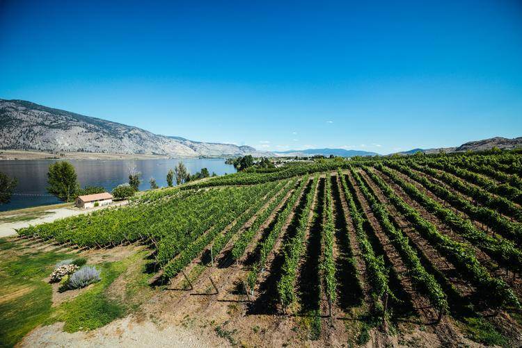 A brief introduction to Canadian wine