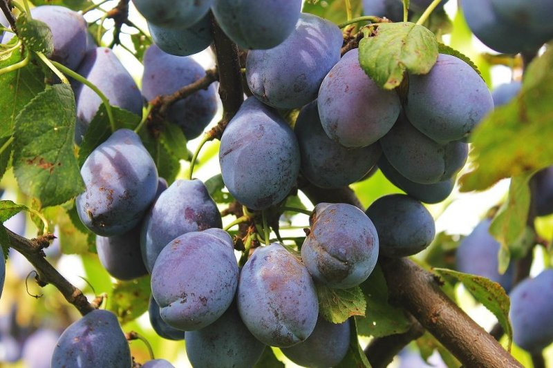 Everything you didn't know about fruit wine