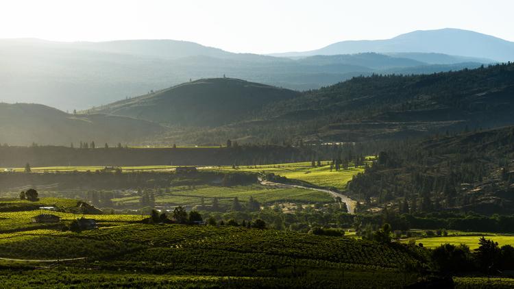 BC wine: learning the basics