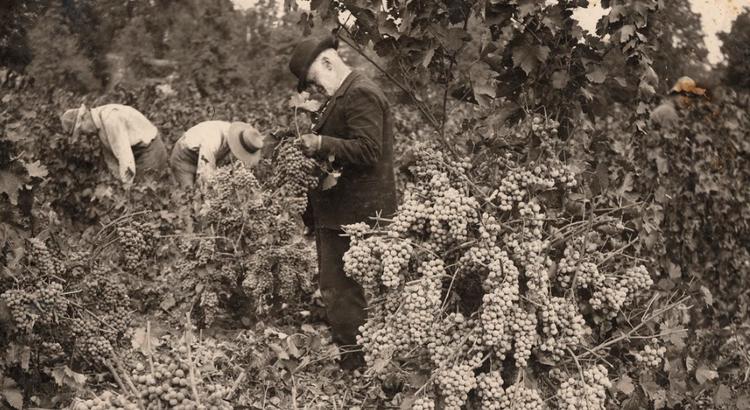 BC wine: a short history