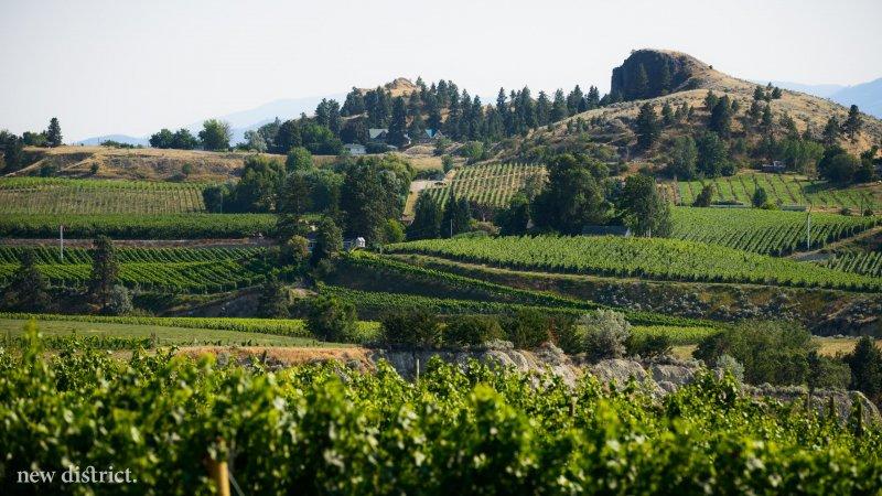 How wine tourism got its start