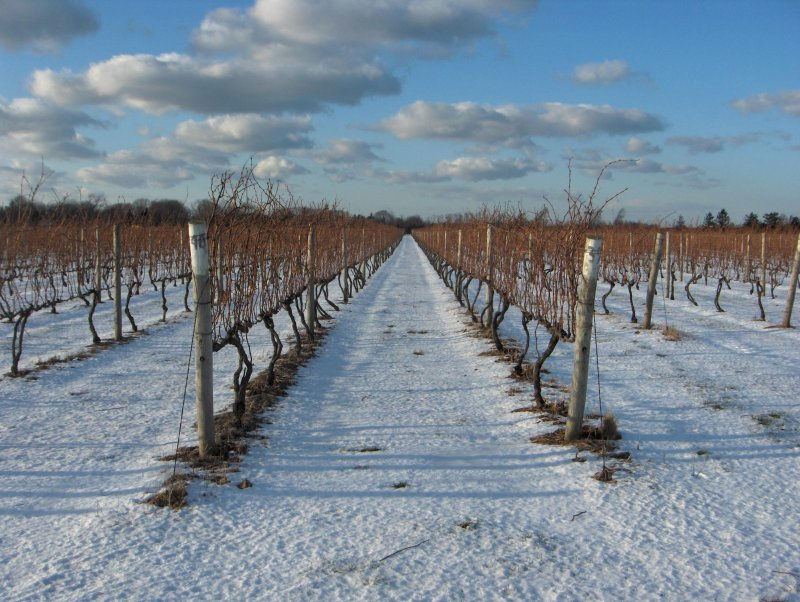 Wine Digest: Cool climates a hot trend, fudging alcohol content, a diet based on chocolate and wine, and more