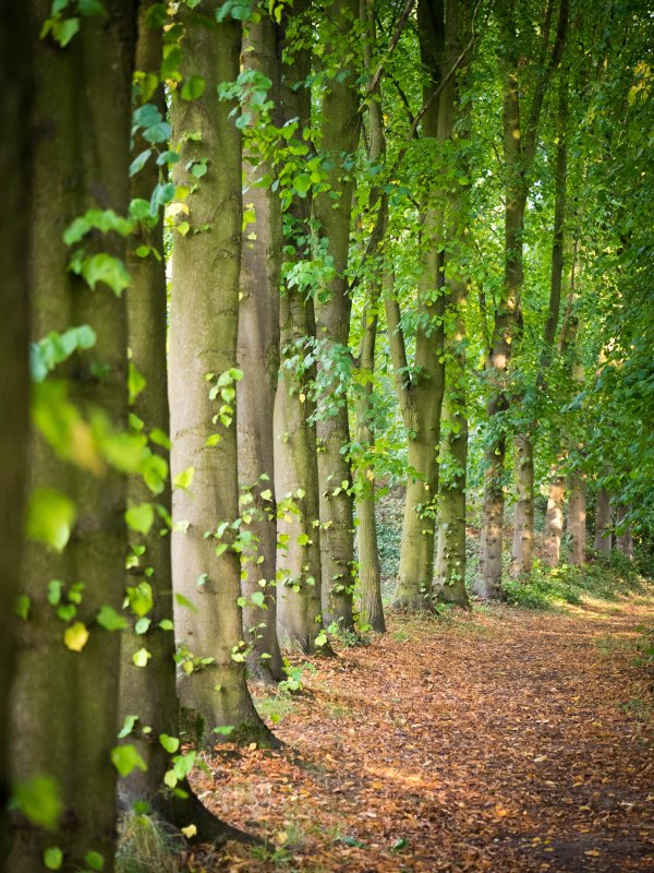 Lovell Walk